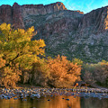 Wild Salt River Horses And Fall Colors At Sunset by Dave Dilli
