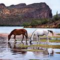 Wild Salt River Horses At Saguaro Lake Arizona by Dave Dilli