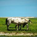 Wild South Dakota by Elizah Monai