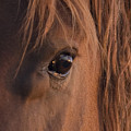 Wild Stallion's Eye by Carol Walker