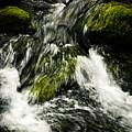 Wild Stream Of Green Moss by Jozef Jankola