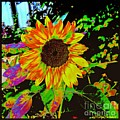 Wild Sunflower by MaryLee Parker