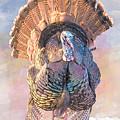 Wild Tom Turkey by Patti Deters