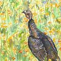Wild Turkey by Ashley Scibilia