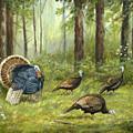 Wild Turkey by Michael Scherer