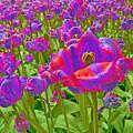 Wild Version Pink And Purple Tulips by Adri Turner