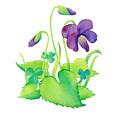 Wild Violet by Laura Nikiel