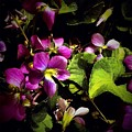 Wild Violets by Debra Lynch