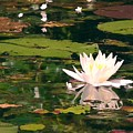 Wild Water Lilly by Patricia L Davidson
