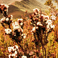 Wild West Mountain View by Jorgo Photography - Wall Art Gallery