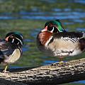 Wild Wood Ducks On A Log by Kathleen Bishop