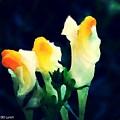 Wild Yellow Flowers On Dark Background by Debra Lynch