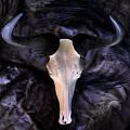 Wildebeest by David Andersen