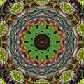 Wilder Flower Mandala by Sandra Gallegos