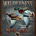 Wilderness Mallard by JQ Licensing