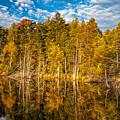 Wilderness Pond 3 by Steve Harrington