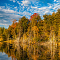 Wilderness Pond  by Steve Harrington