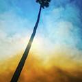 Wildfire Palm by Braden Moran