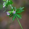 Wildflower 2 by Karin Everhart