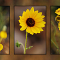 Wildflower 3 by Jill Reger
