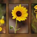 Wildflower 3 by Jill Reger