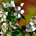 Wildflower 4 by Karin Everhart