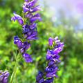 Wildflower Afternoon by Susan Warren