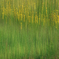 Wildflower Fields Abstract by Mitch Spence