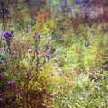 Wildflower Garden Impression 4464 Idp_2 by Steven Ward