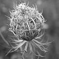 Wildflower I by Phillippe Diederich