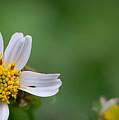 Wildflower by Jan Herren