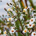 Wildflower,  by JoAnne Burgess