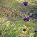 Wildflower by Kiana Carr