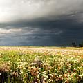 Wildflower Panorama 2008 by Eric Benjamin