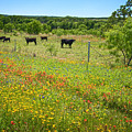Wildflower Pastures On Willow City Loop by Lynn Bauer