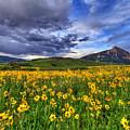 Wildflower Storm by Scott Mahon