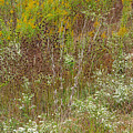 Wildflower Tapestry In Jefferson County by Greg Matchick