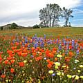 Wildflower Wonderland 5 by Lynn Bauer