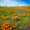 Wildflower Wonders Of The High Desert by Lynn Bauer