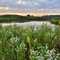Wildflowers Adorn Nippersink Creek In Glacial Park by Ray Mathis
