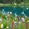 Wildflowers Along The Lake by Cascade Colors
