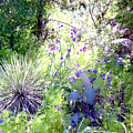 Wildflowers And Cactuses by Ruth Housley