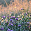 Wildflowers At Sunrise by Maria Urso