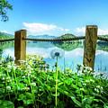 Wildflowers At The Lake In Spring by Debra and Dave Vanderlaan