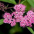 Wildflowers Come In Many Sizes by John Haldane