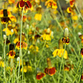 Wildflowers Four by Stephen Anderson