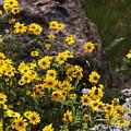 Wildflowers Honoring Mary Jabens by Judy Schneider
