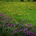 Wildflowers In An Irish Field by James Truett