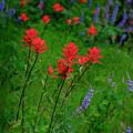 Wildflowers In Mountains Wilderness by Lane Erickson