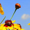 Wildflowers by J R Seymour